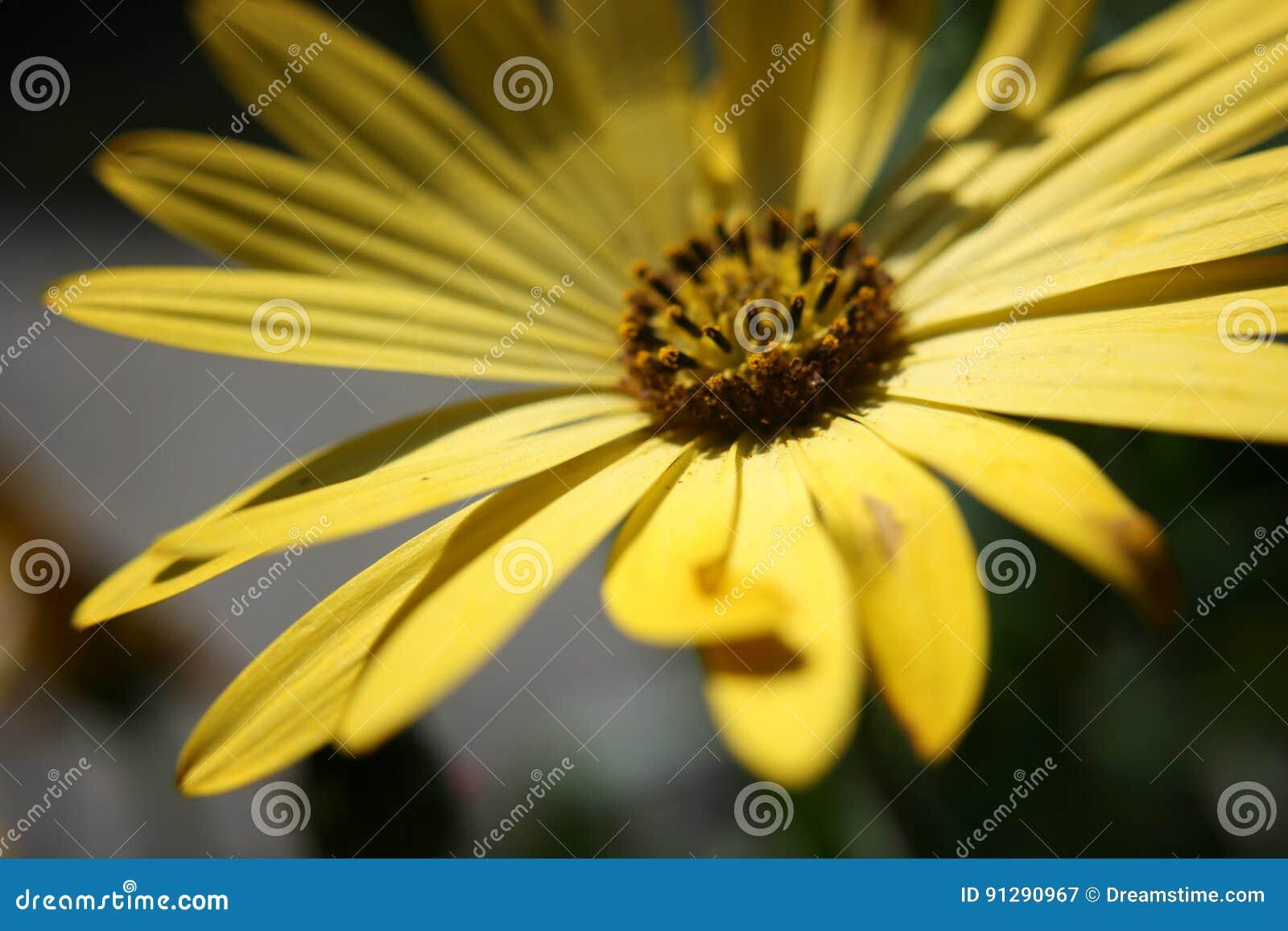 Plan rapproché jaune de fleur