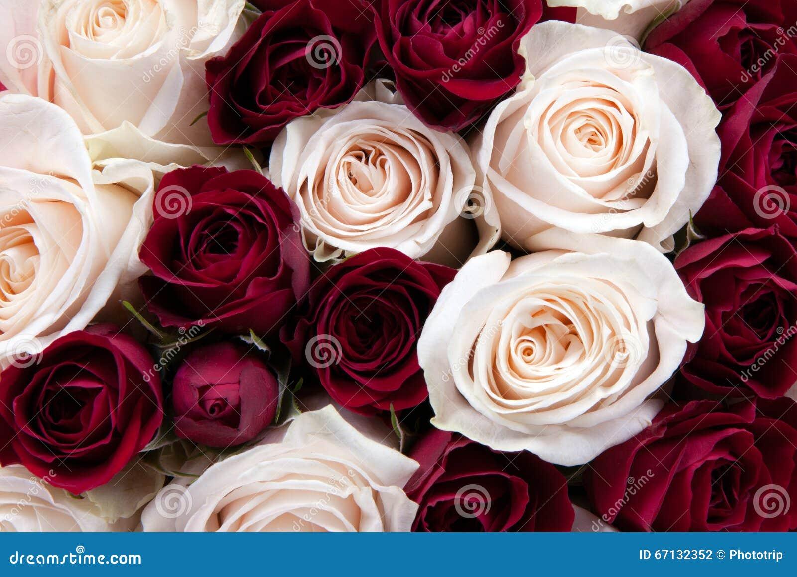 Plan Rapproché Magnifique Dun Bouquet Des Roses Rouges Et