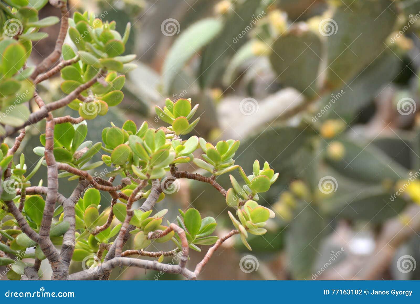 Plan rapproché vert d usine de cactus