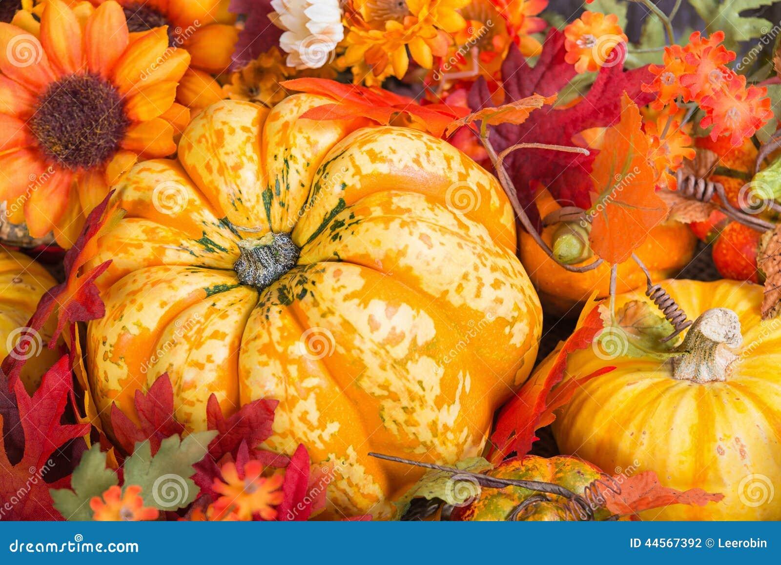 Plan rapproch d 39 un affichage color d 39 automne avec un fruit de courge photo stock image 44567392 - Images d automne gratuites ...