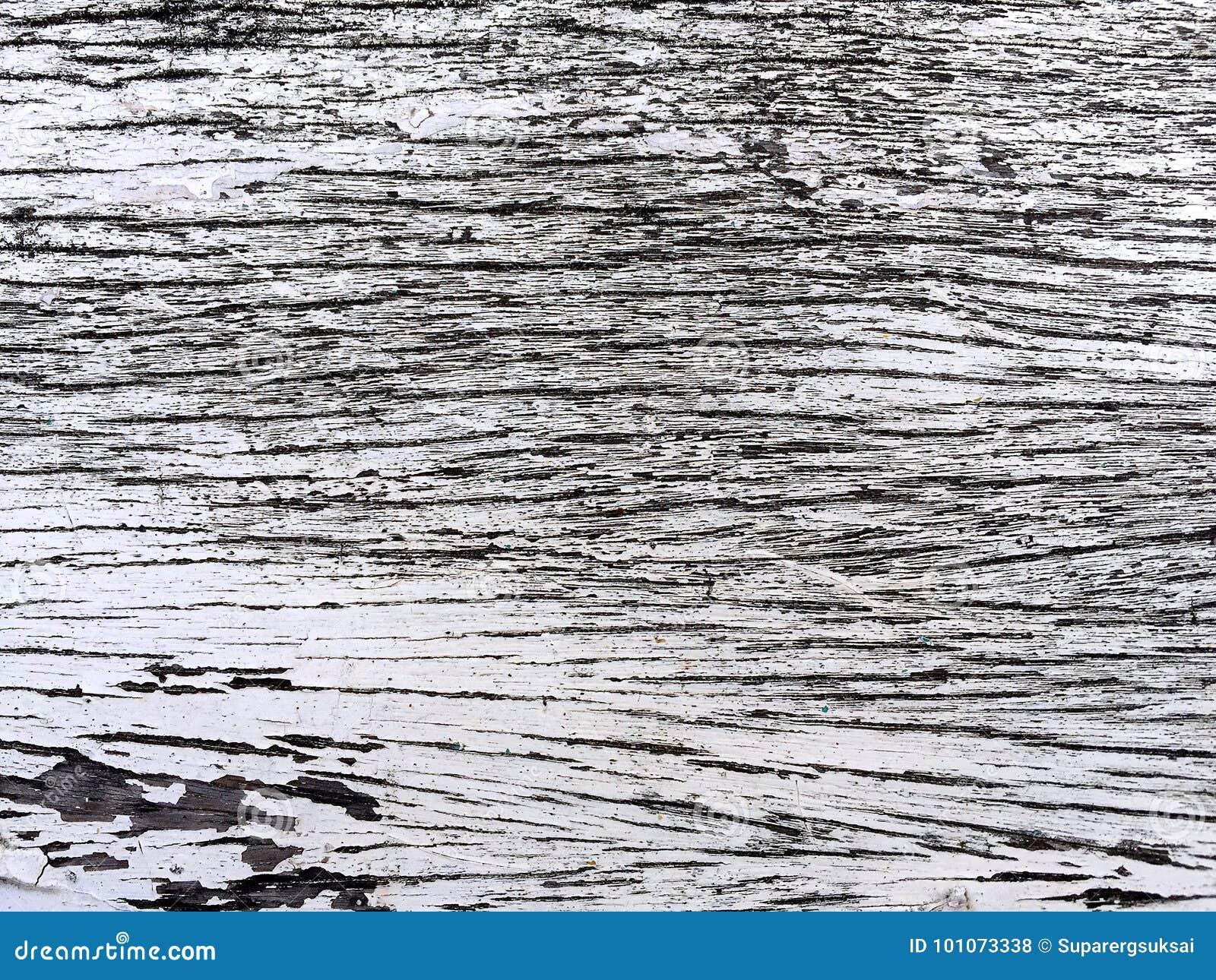 Plancia della corteccia di albero