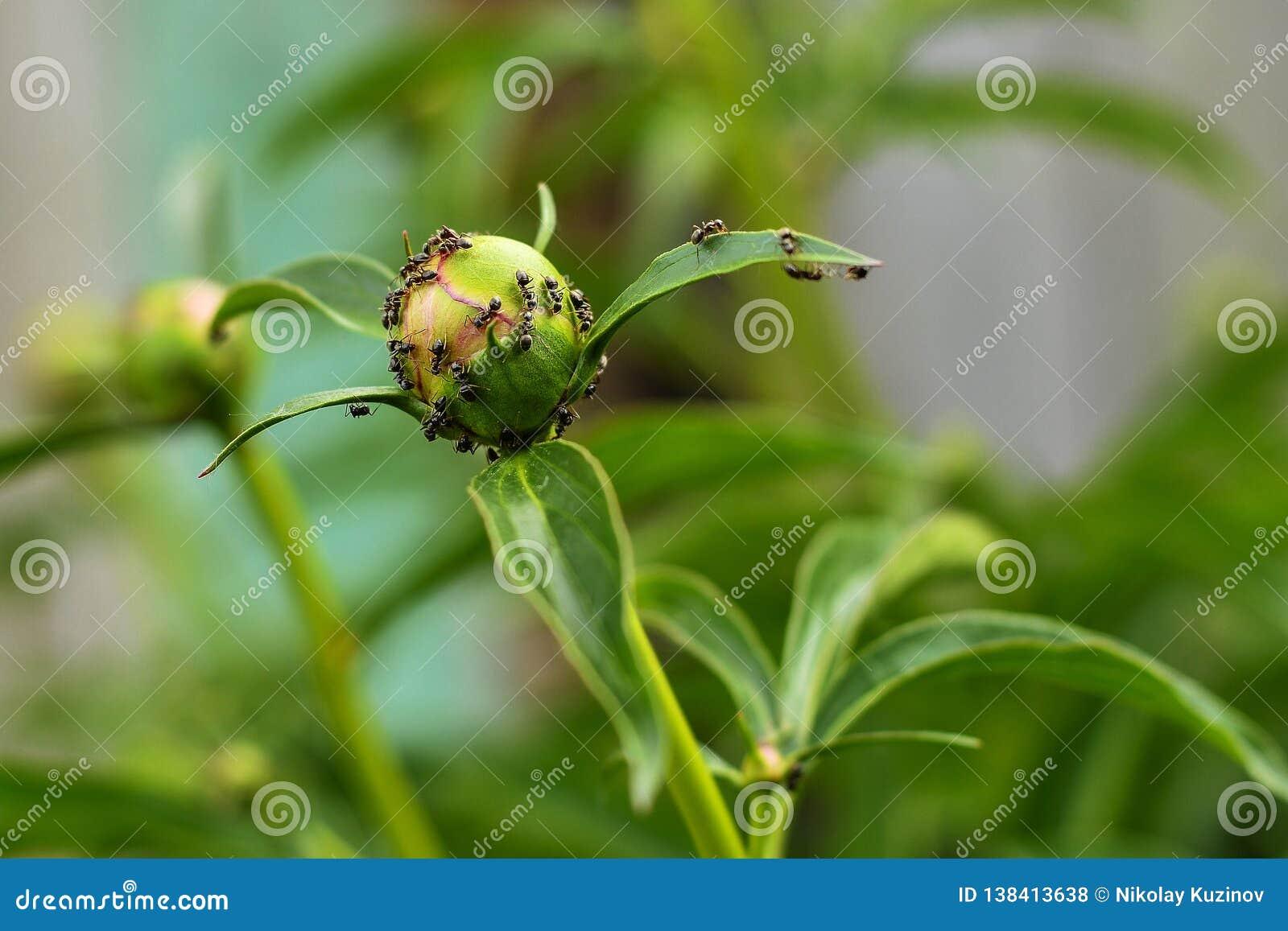 Planeta verde de las hormigas