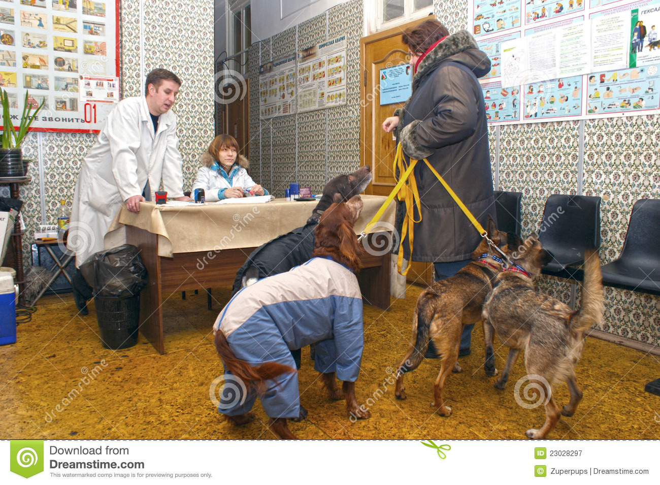 Planned inoculation of house dogs