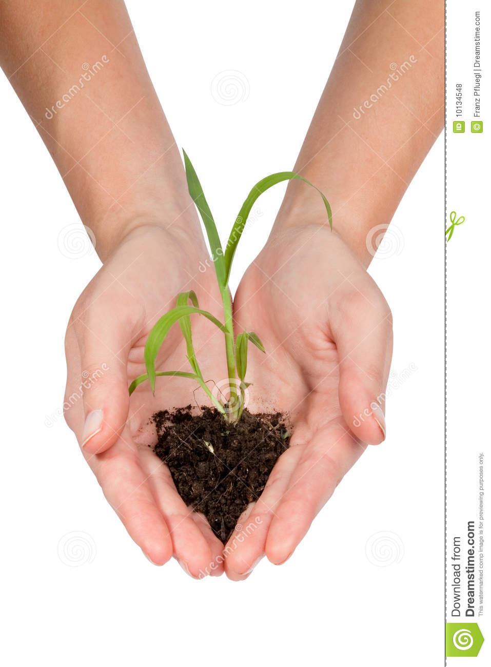 Plant royalty free stock photos image 10134548 for Ohrensessel 2 hand