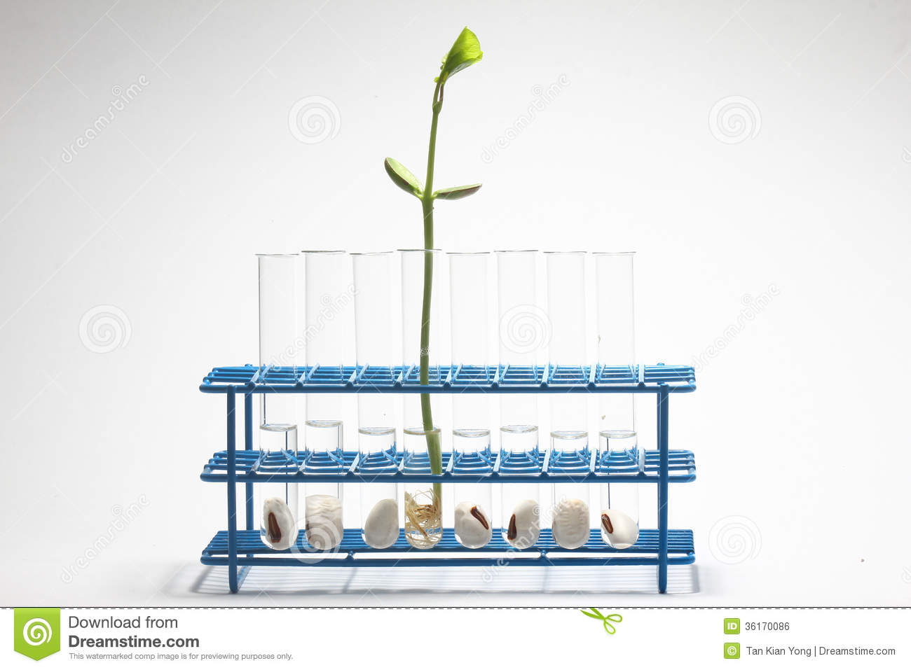 thesis on plant biotechnology 1227 words free sample essay on the importance of biotechnology the mode shares the strain or happiness and supports that will provide a full - blown through thesis biotechnology every.