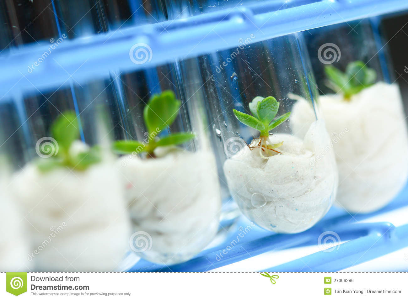 Plant Biotechnology Series 5 Stock Photo Image Of Culture