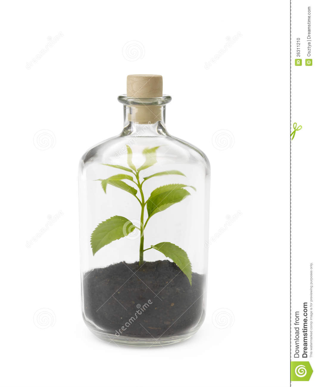 More similar stock images of ` Plant in a bottle `