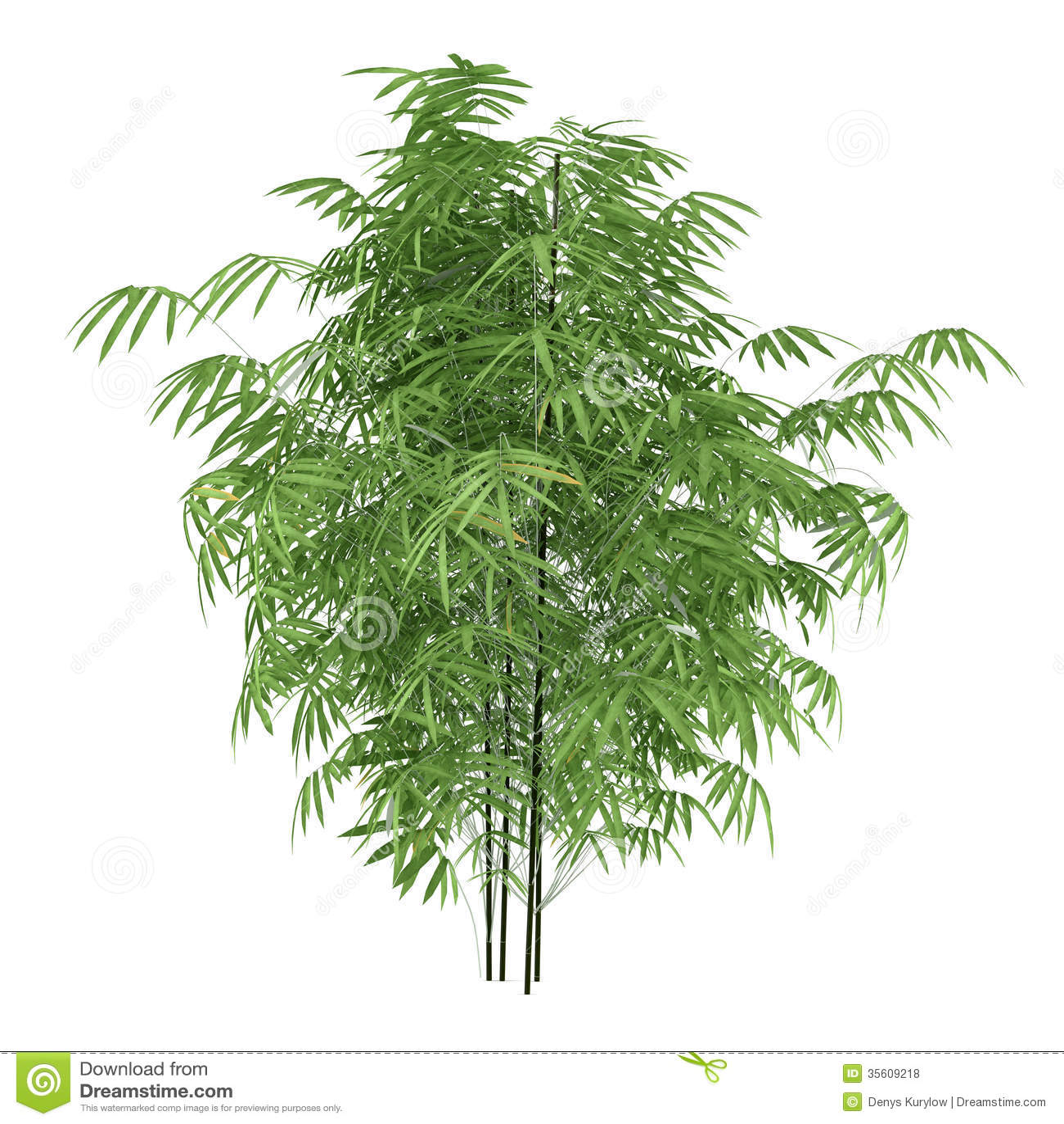Plant Bush Isolated. Phyllostachys Aurea Stock Illustration ...