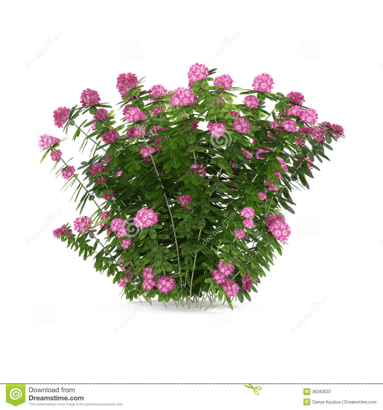 Plant Bush With Pink Flowers Isolated Stock Illustration