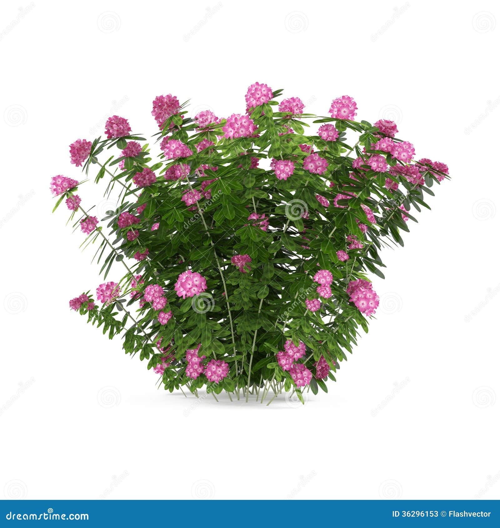 Plant bush with pink flowers stock illustration for Arbustos de jardin con flores