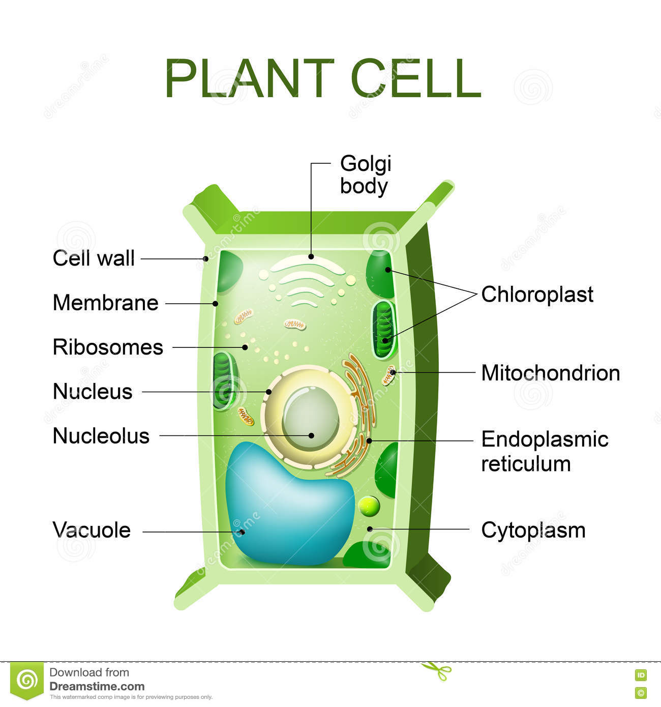 Plant cell anatomy stock vector. Illustration of engineering - 76671566