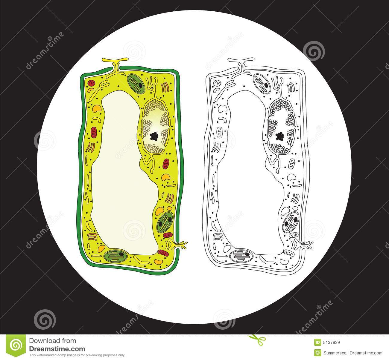 Plant Cell Cross Section Royalty Free Stock Images