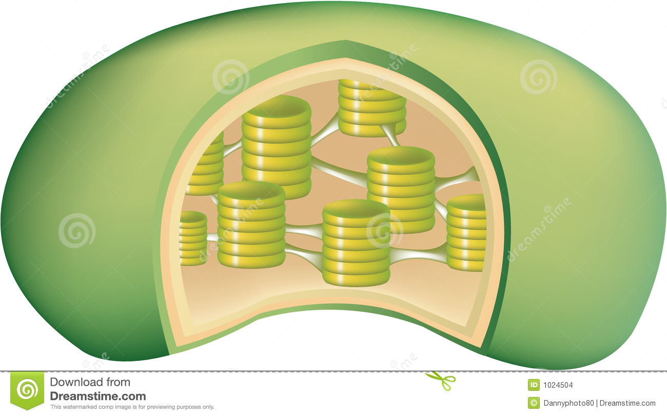 Make A Plant Cell Diagram Electrical Wiring Pics Photos 3d With Labels Chloroplast 2 Stock Images Image 1024504 How To