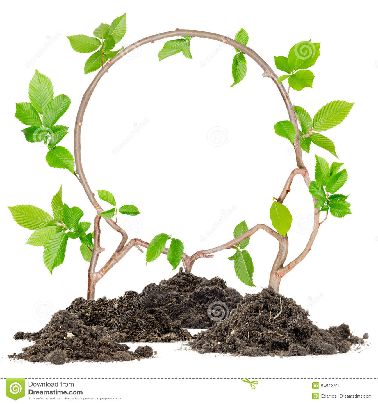 Plant circle stock photo image 54532201 for Plants to grow in garden