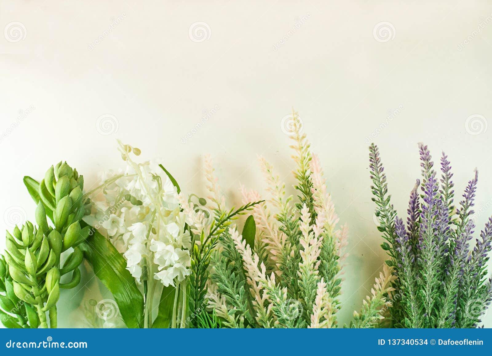 Plant Cluster Succulent Garden Fresh Nature Green Border Stock