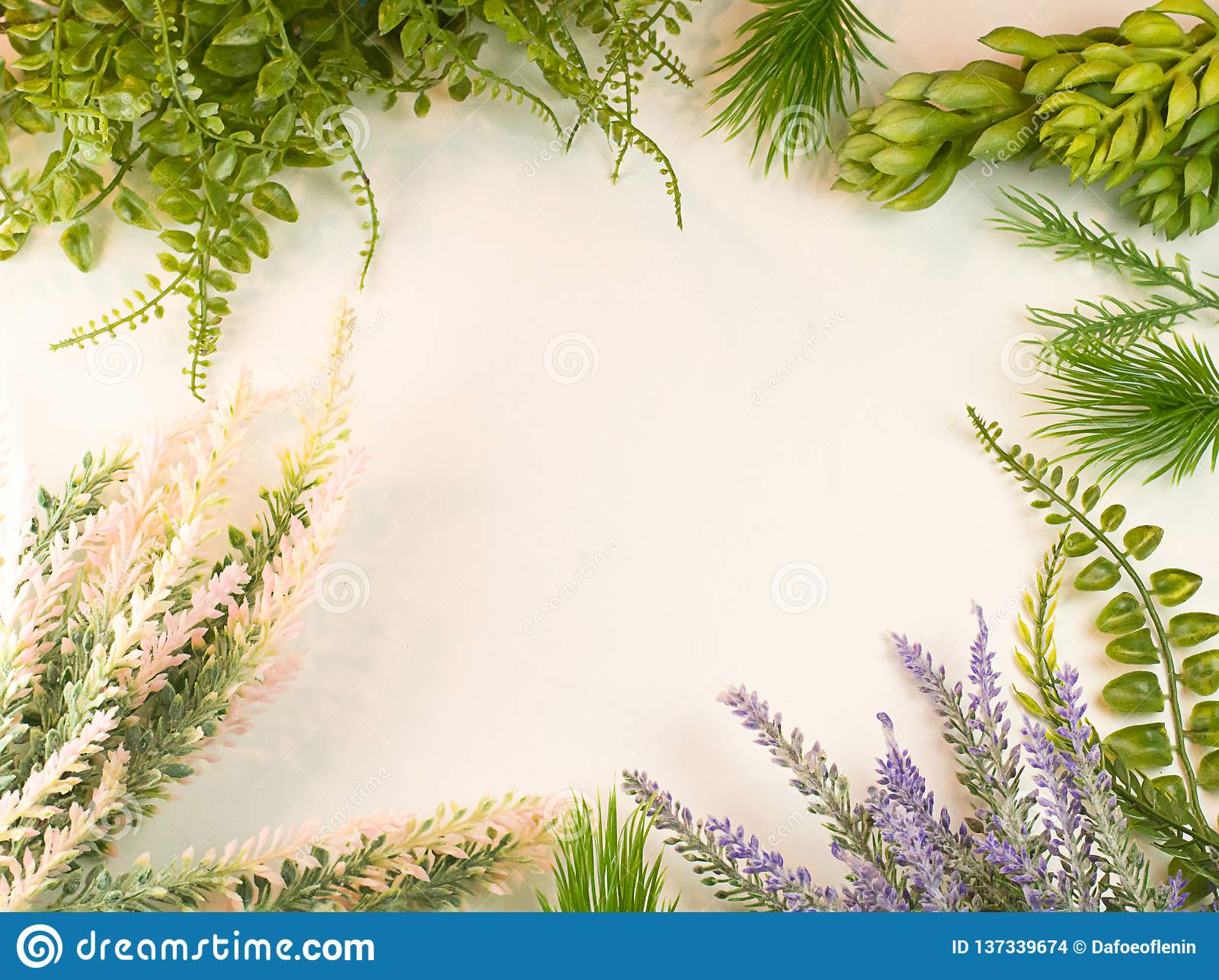 Plant Cluster Succulent Garden Green Border Stock Photo Image Of