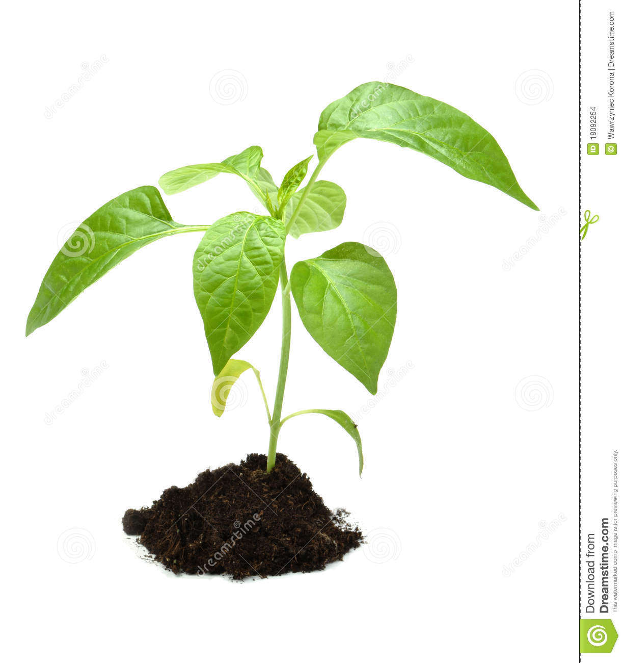 Young plant in dark soil cartoon vector cartoondealer for Soil young s modulus