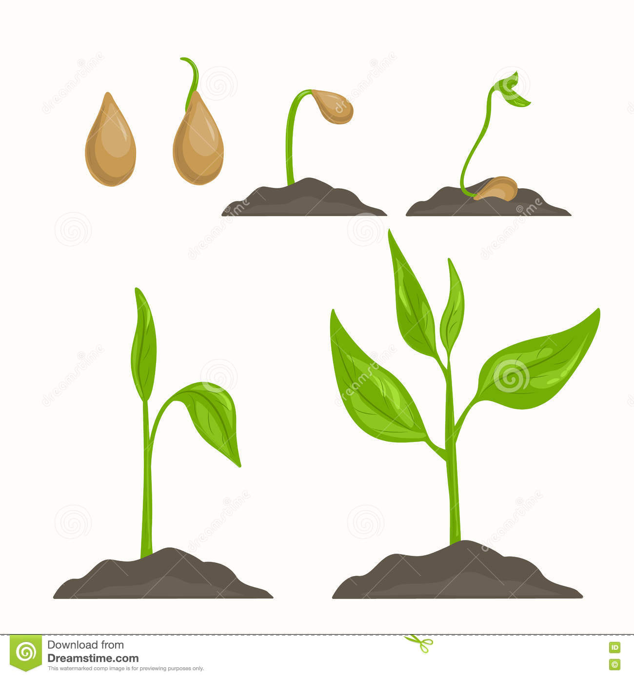 Seed Germination Diagram Fill In Electrical Wiring Process Get Free Image 3 Stages Of Drawings Germinating