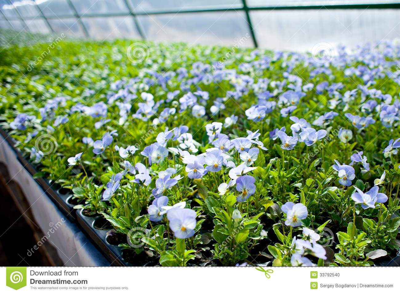 Plant green house garden flower nursery stock photo for Green plants for garden