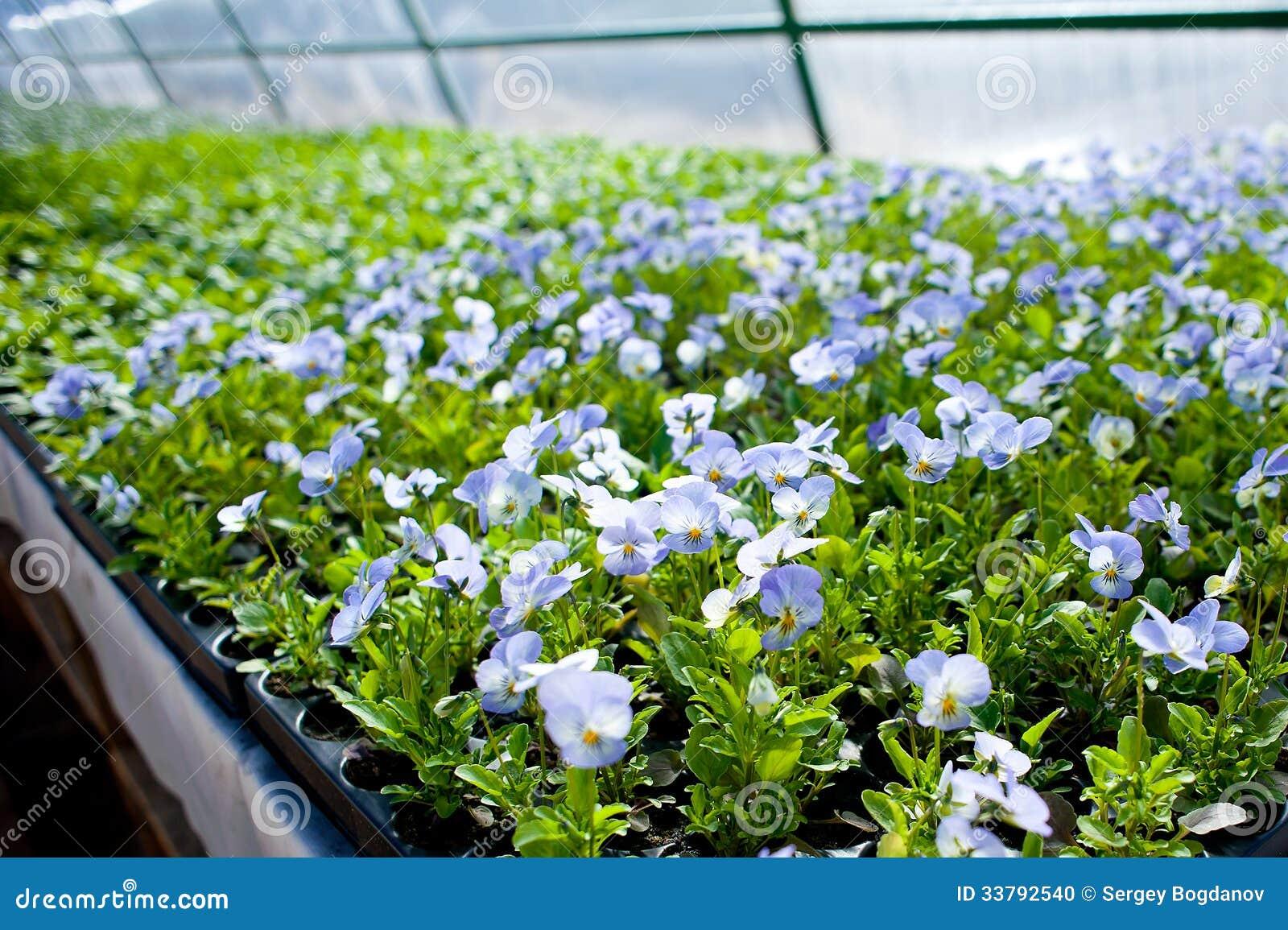 Plant green house garden flower nursery stock photo for Green plants for landscaping