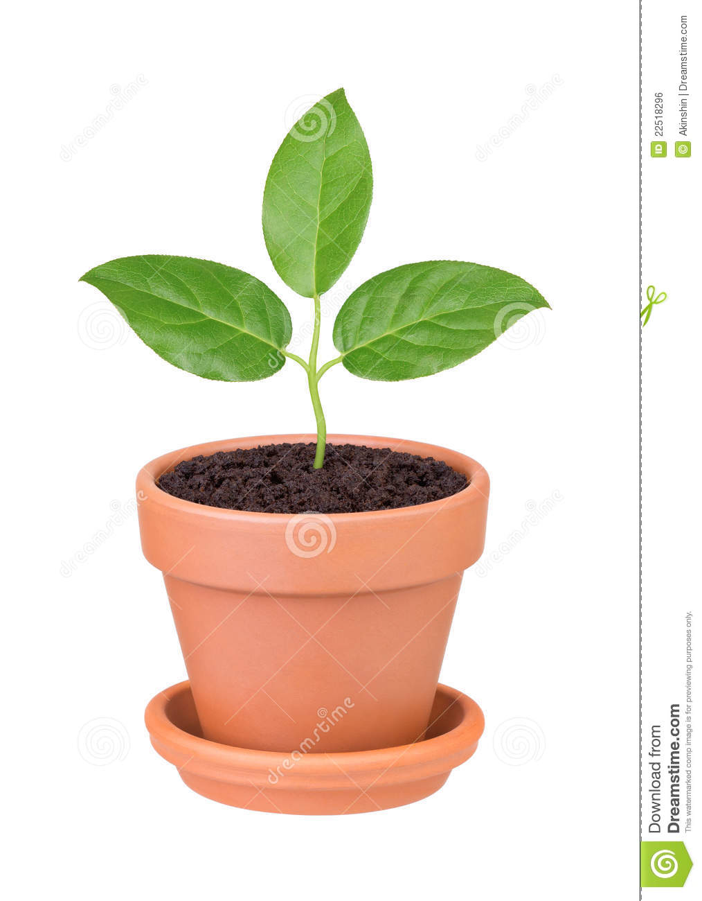 plant with green leaves growing in a pot royalty free stock image image 22518296