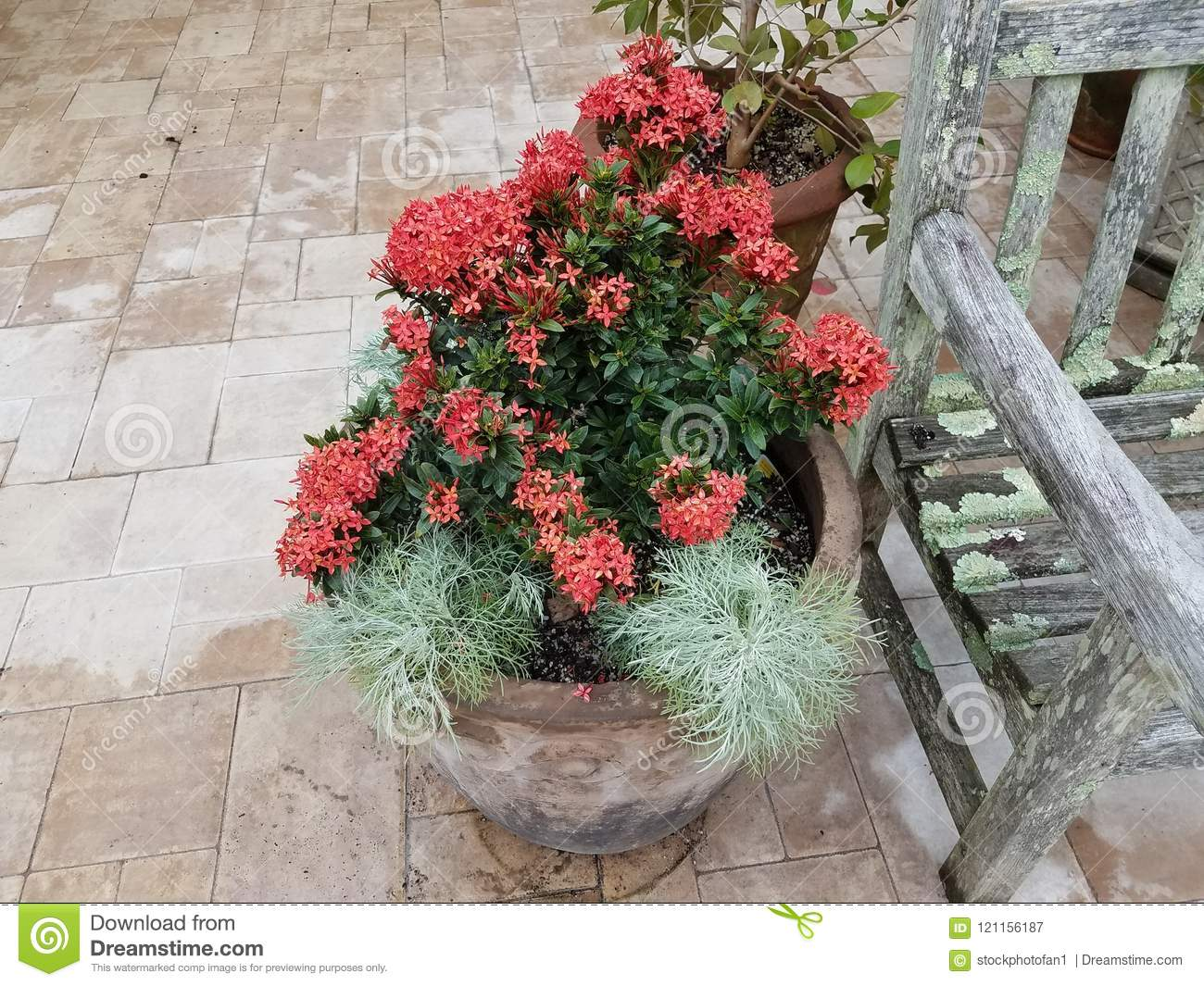 Plant With Green Leaves And Pink Flowers In Flower Pot Near Wood