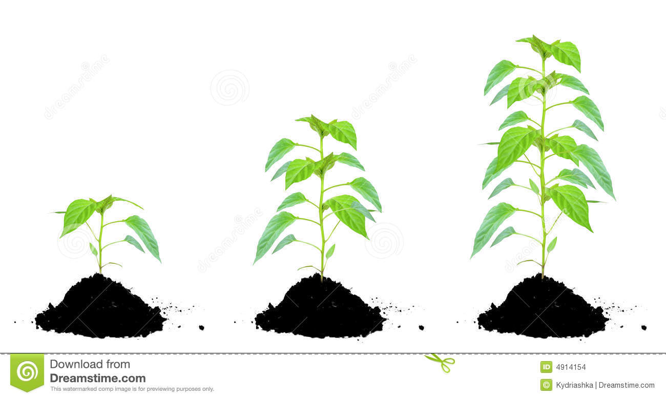 Plant green and soil stock images image 4914154 for Soil and green