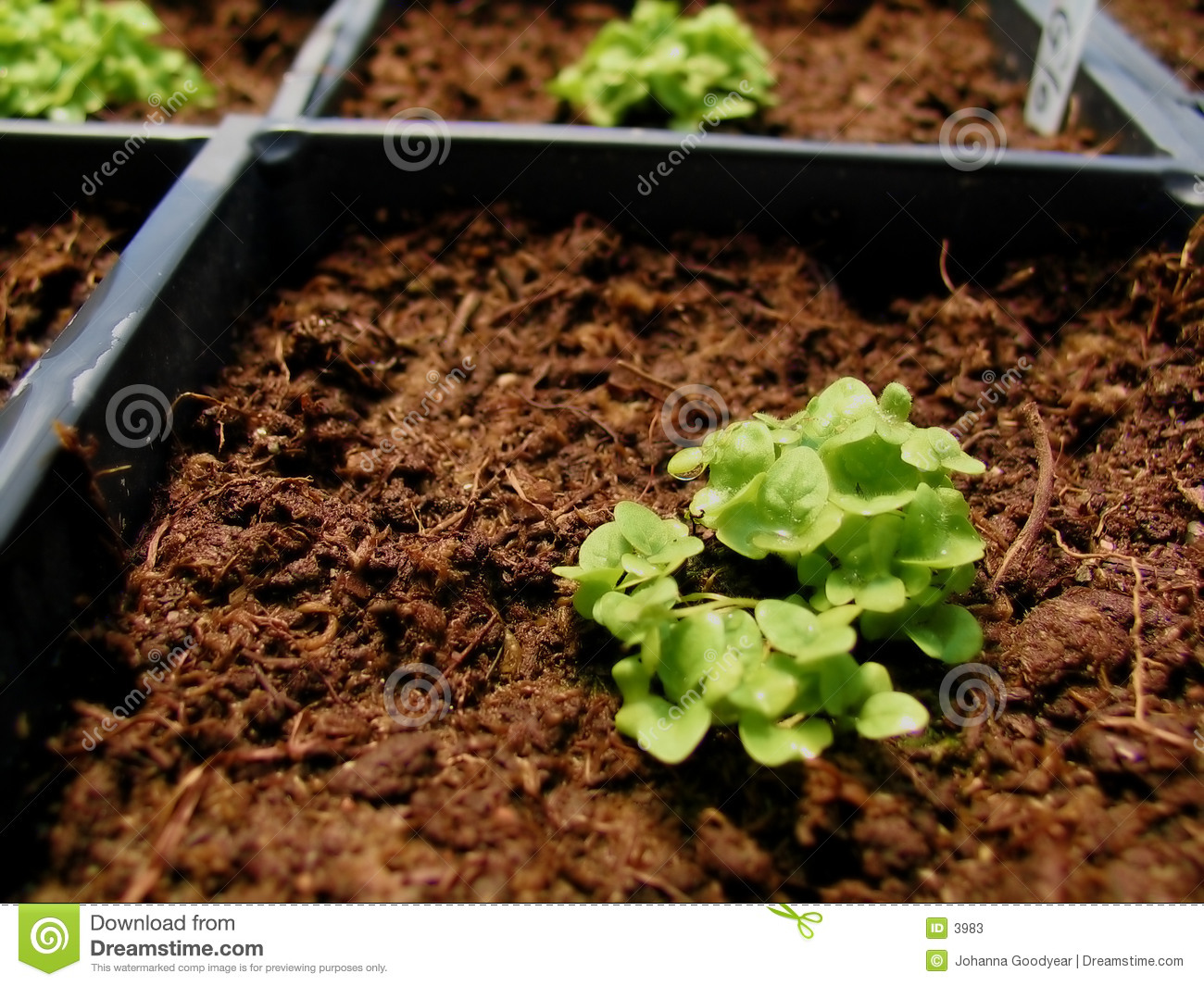 Download Plant in Greenhouse stock image. Image of planting, grow - 3983