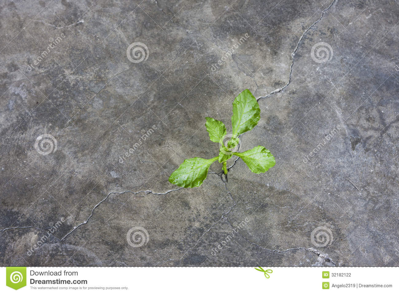 how to kill weeds in cracks of cement