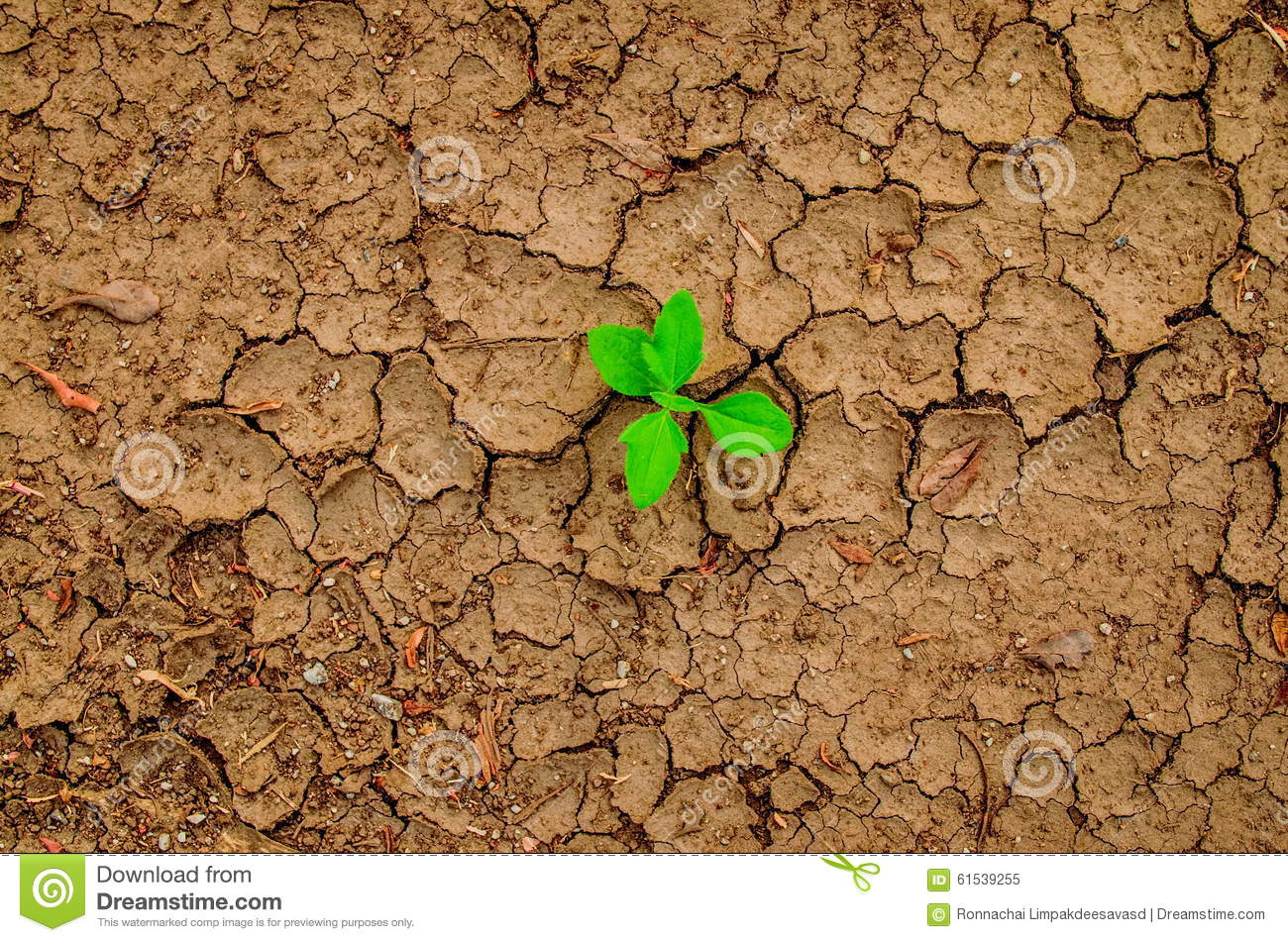 Plant growing through the ground, hope concept