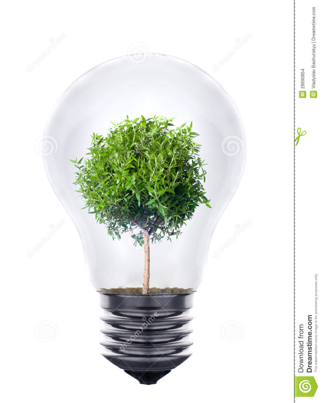 Plant Growing Inside The Light Bulb