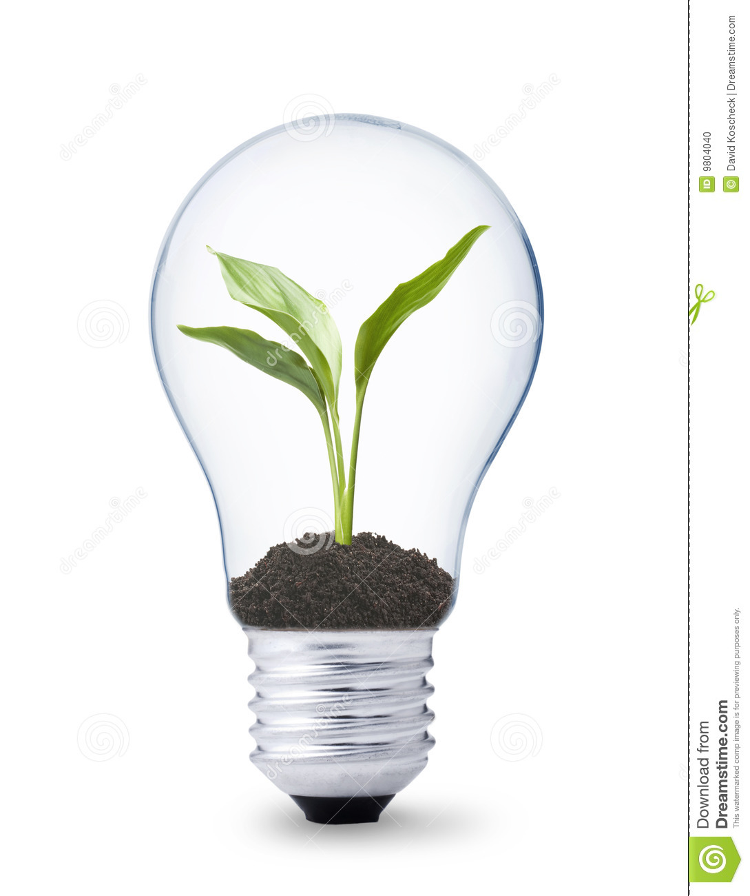 Plant Growing Inside A Lightbulb Stock Photo Image Of Electricity