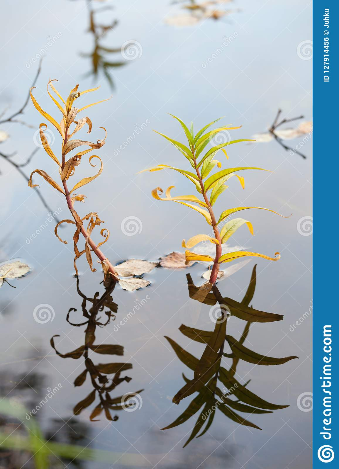 Plant growing in lake