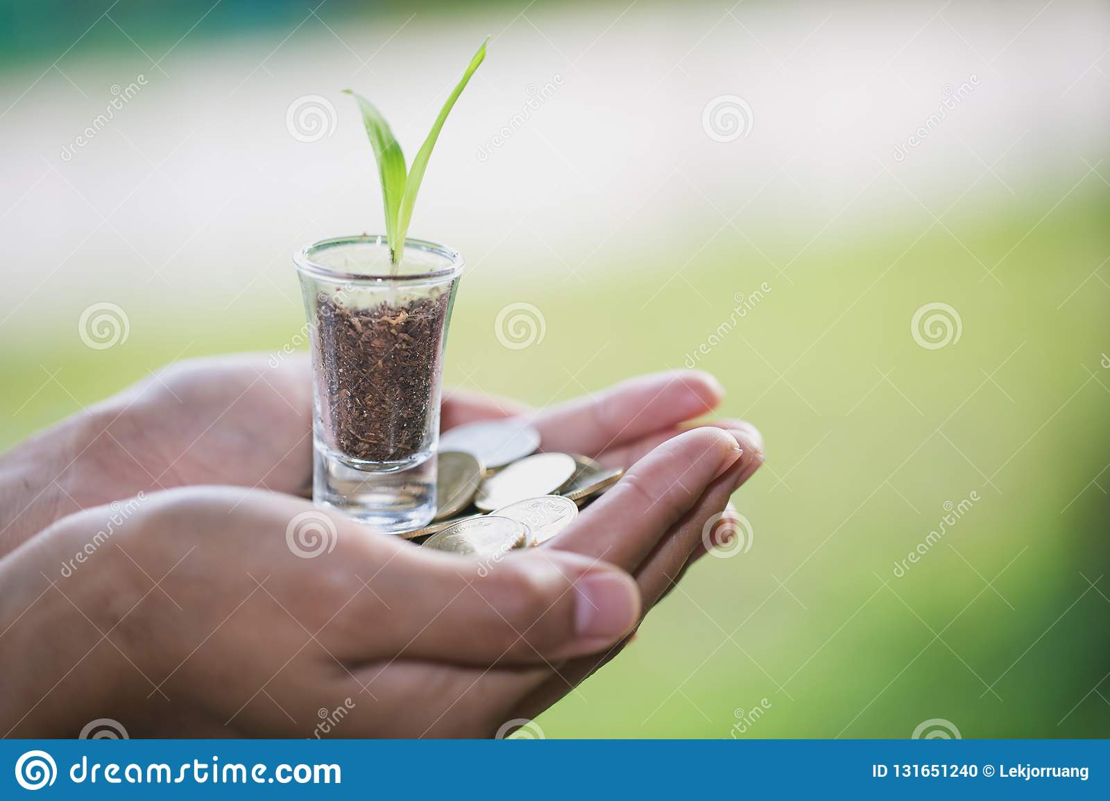 Plant growing from money coins in the glass jar held by a man`s hands, business and financial metaphor concept