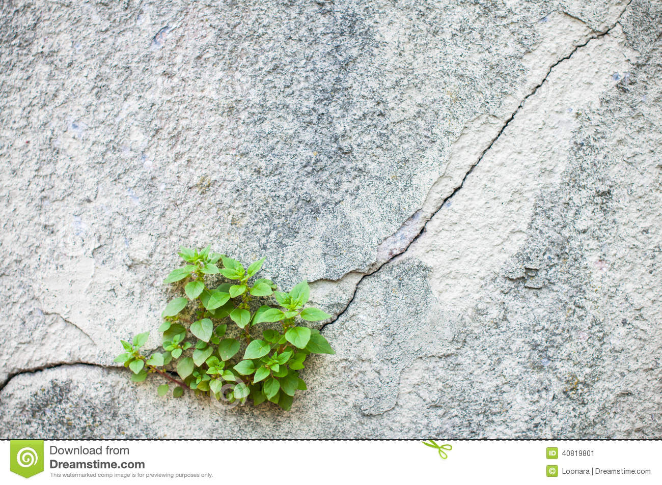 Plant Growing Out Of An Old Wall Stock Photo Image 40819801