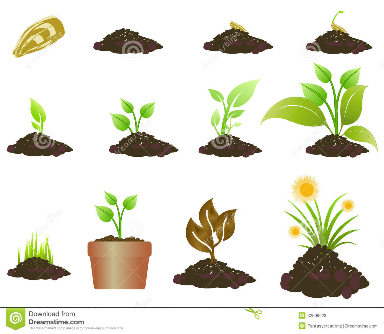 Plant Growing Stock Photos - Image: 32509023