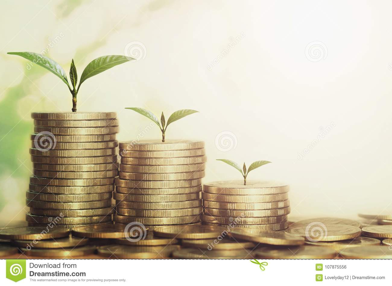 plant growing step of money stack