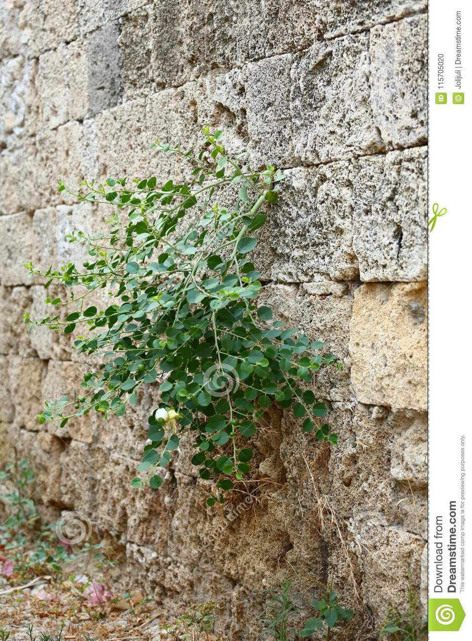Plant growing on the wall