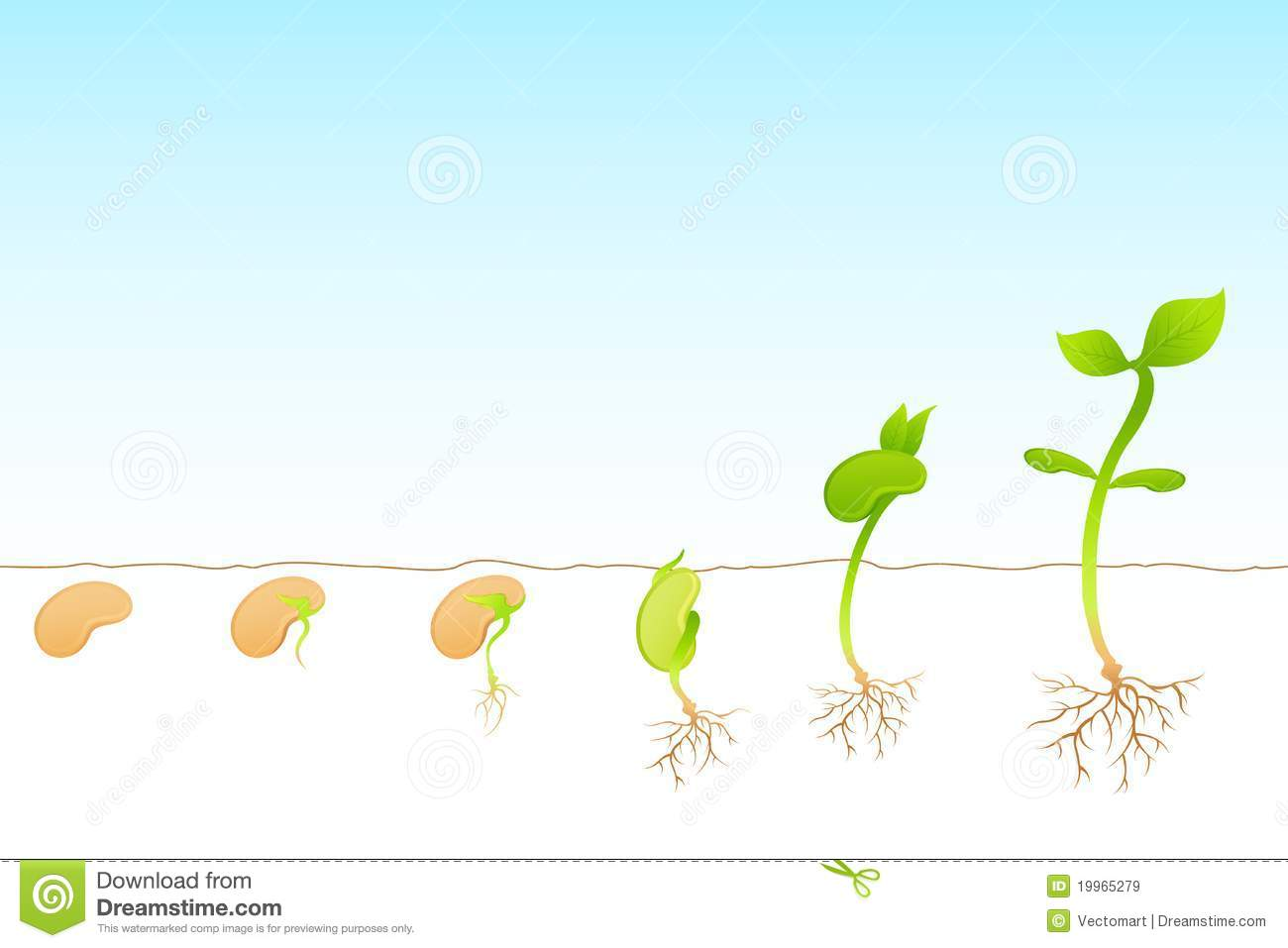 Plant Growth Royalty Free Stock Images - Image: 19965279