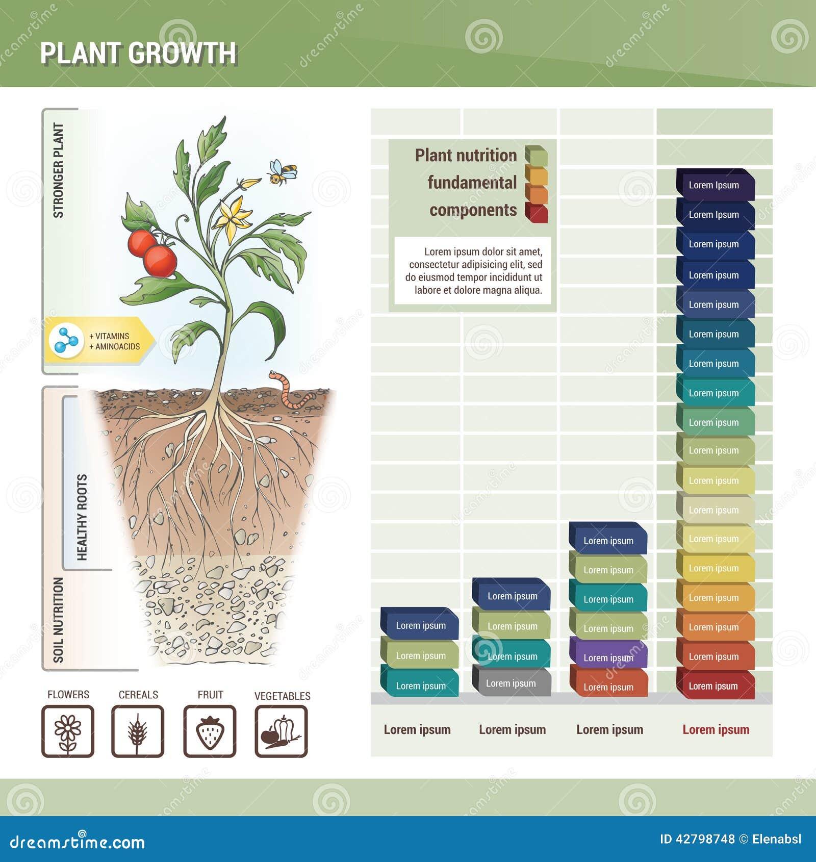 Plant growth stock vector. Illustration of fertiliser ...