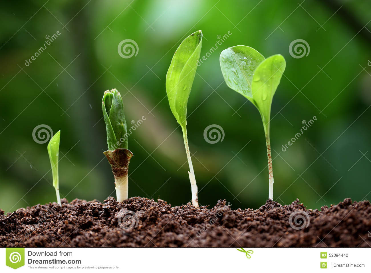 Life growth business linear grow money green line up natural em stock photography - Successful flower growing business ...