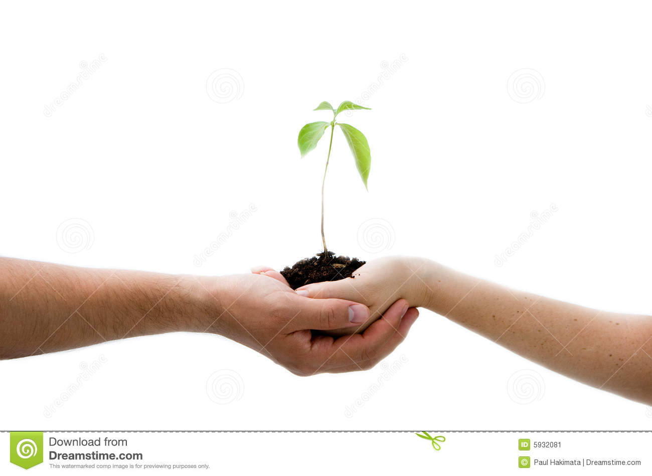 Plant In Hands Stock Image Image 5932081