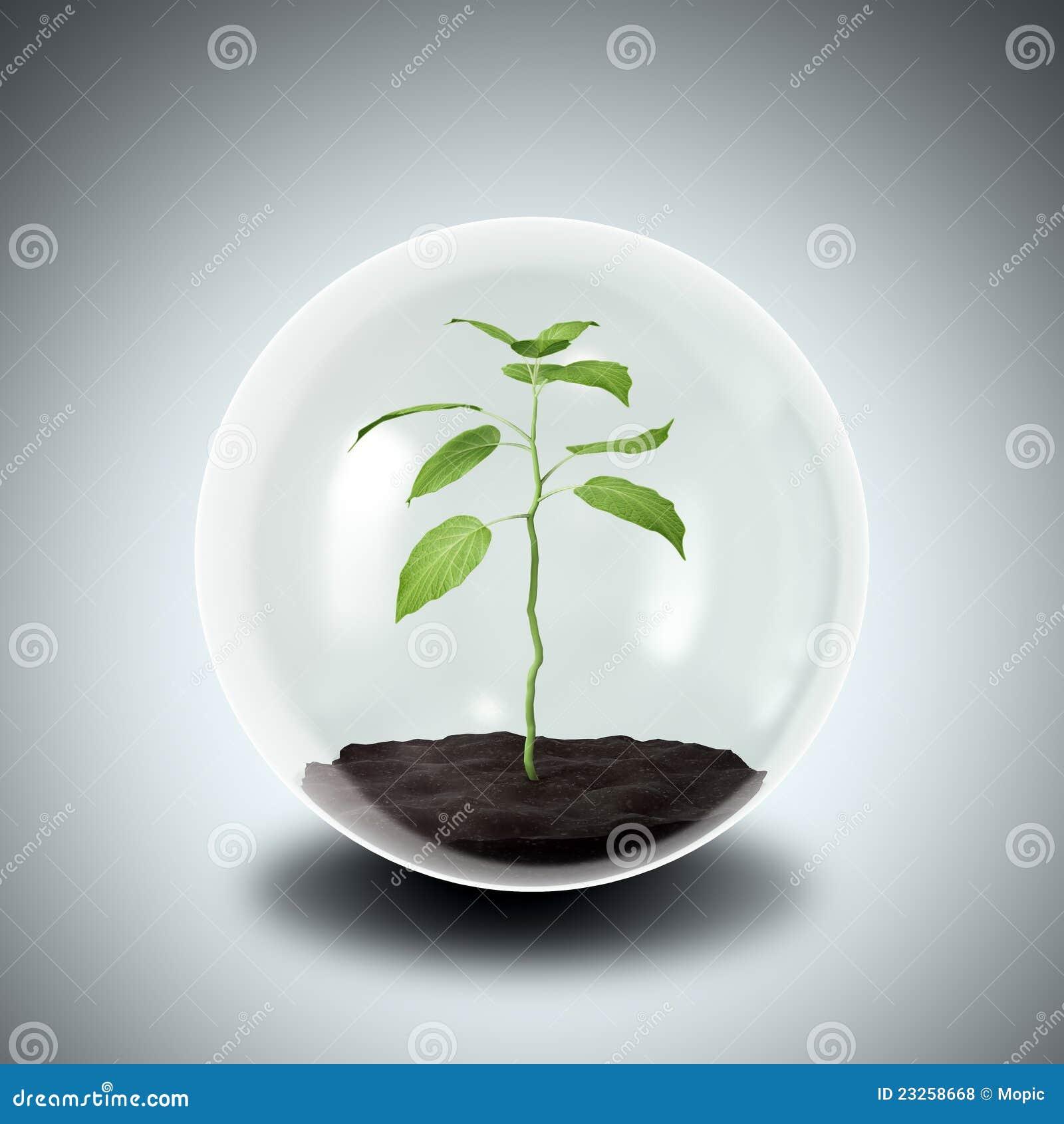 Plant inside a glass hole