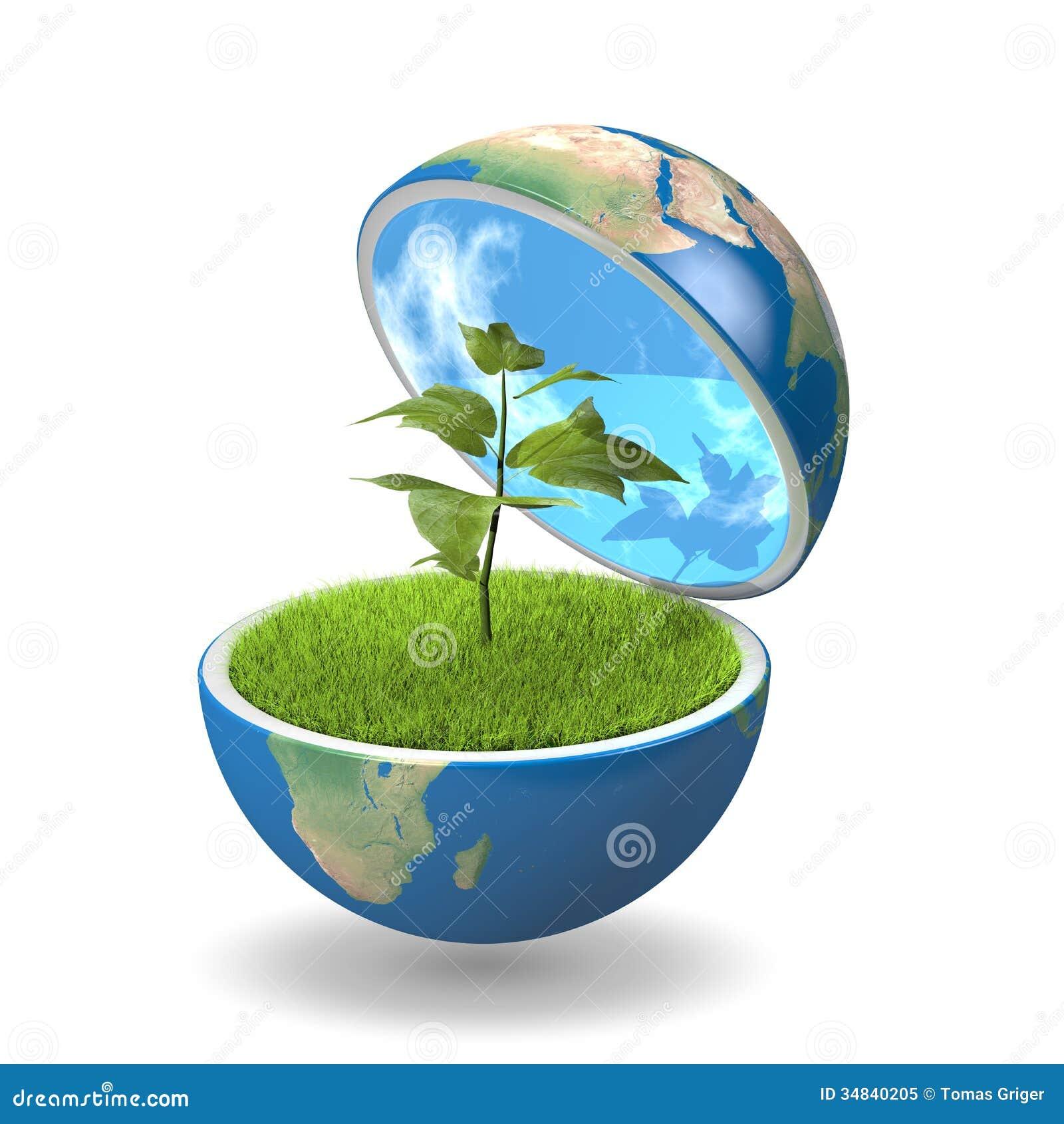 plant inside pla  royalty free stock photo   image 34840205