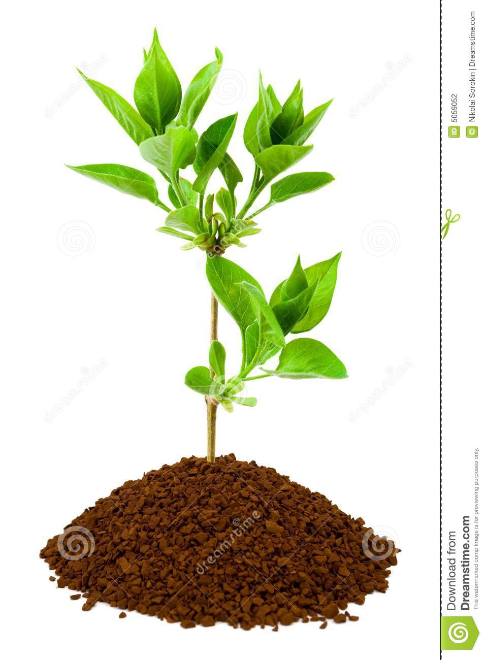Plant In Land Stock Photography