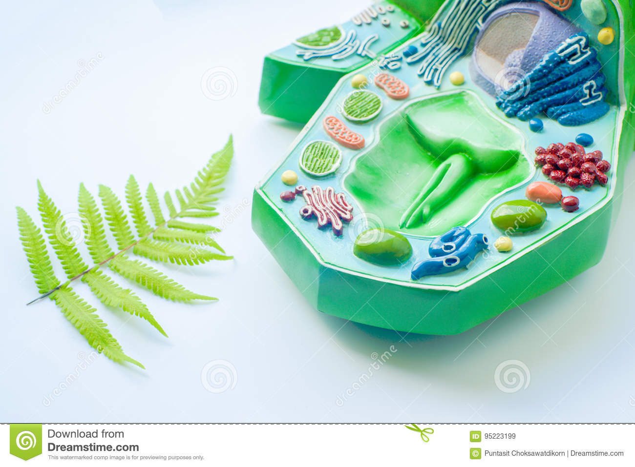 Plant Leaf And Model Of Cell