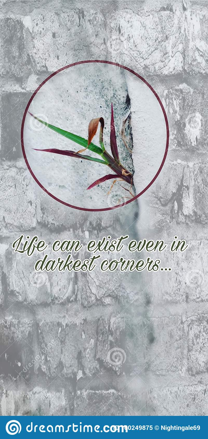 Plant Leaves Growing Out From Cracks In Brick Wall Background With Quote Stock Image Image Of Gray Hope 160249875