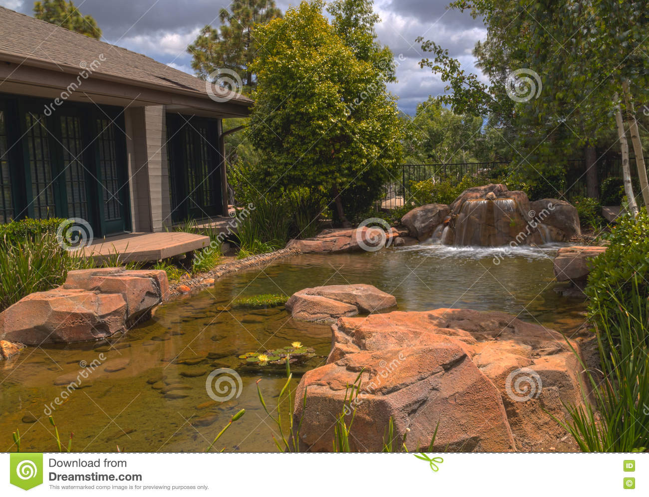 Plant life koi fish and a waterfall in a pond in southern for Koi fish living conditions