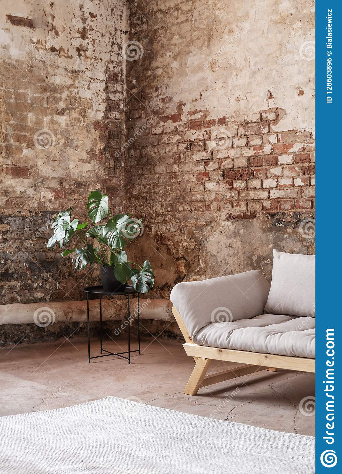 Plant next to grey sofa in industral room interior with carpet and red brick wall