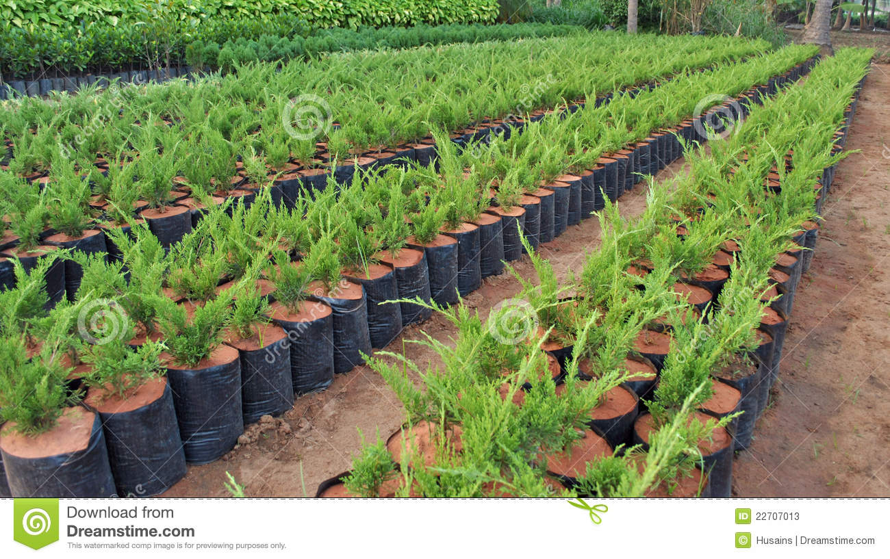 Plant nursery stock photos image 22707013 for Plant nursery